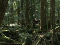 La forêt, un investissement stratégique dont la valeur est protégée par un usage incontestable !