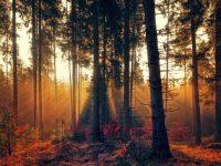 Investir dans une forêt avec le Groupement Foncier Forestier (GFF) : avantages et évolutions